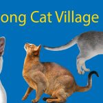 LTL's Guide to Houtong Cat Village: No 1 Destination for Feline Lovers Thumbnail