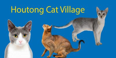 LTL's Guide to Houtong Cat Village: No 1 Destination for Feline Lovers
