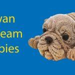 Taiwan Ice Cream Puppies: The Social Media Sensation Thumbnail