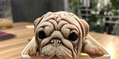 Taiwan Ice Cream Puppies: New Social Media Sensation
